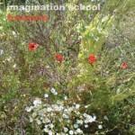 Imagination School Treasure Album Cover